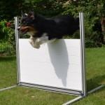 RS-Obedience Hürde Hund beim Sprung